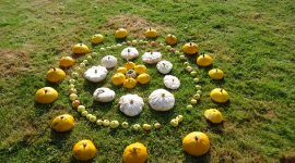 Autumn orchard art