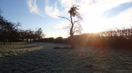 Frosty orchard