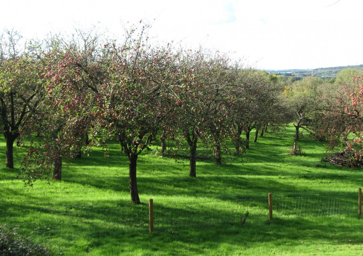 Orchard Ridges at Whimple