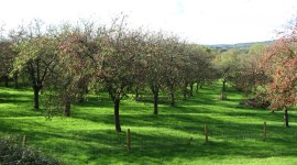 Orchard-Ridges-at-Whimple