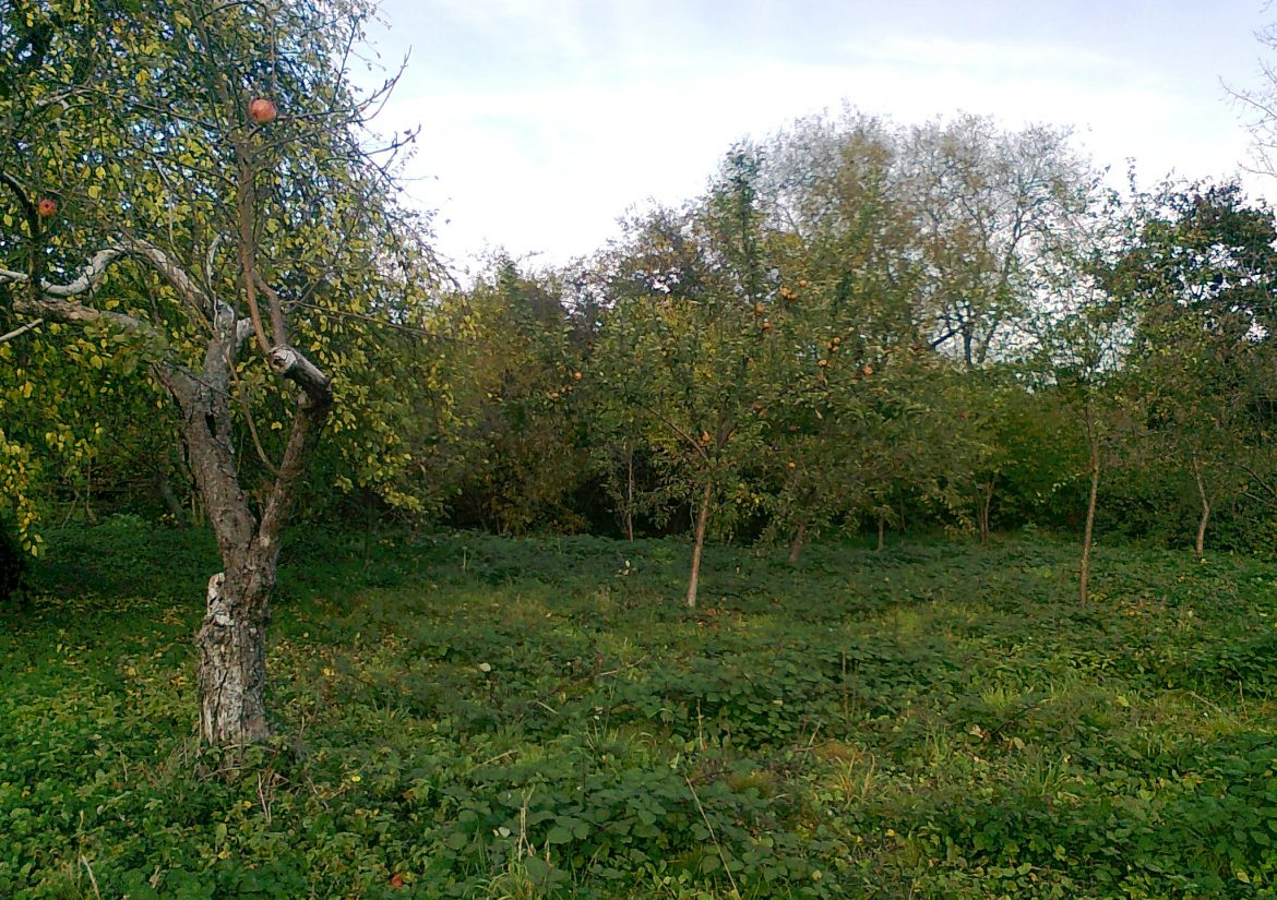 Partridges Orchard (2)