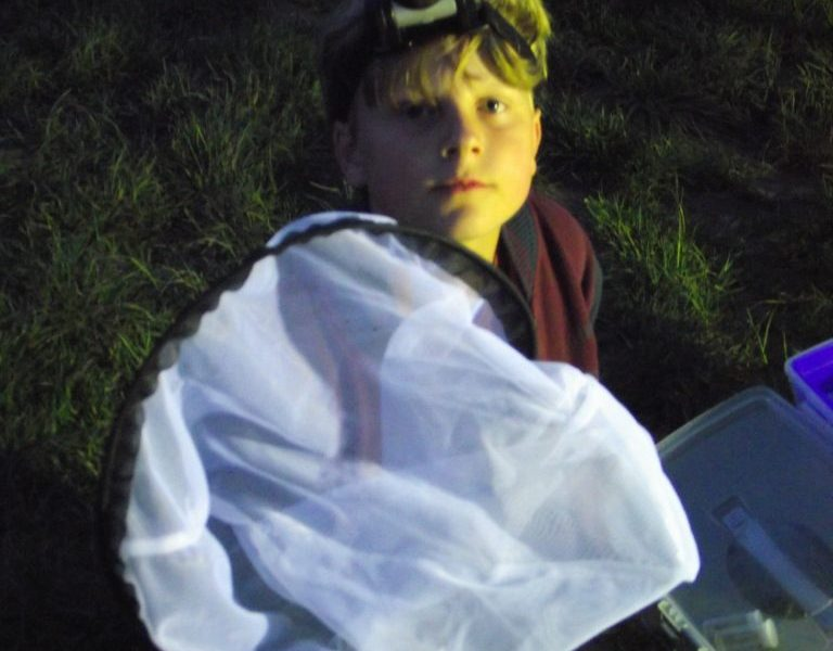 Moth surveys at night