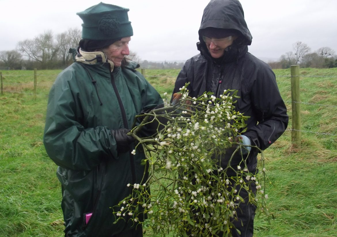 Mistletoe training Feb 16 027