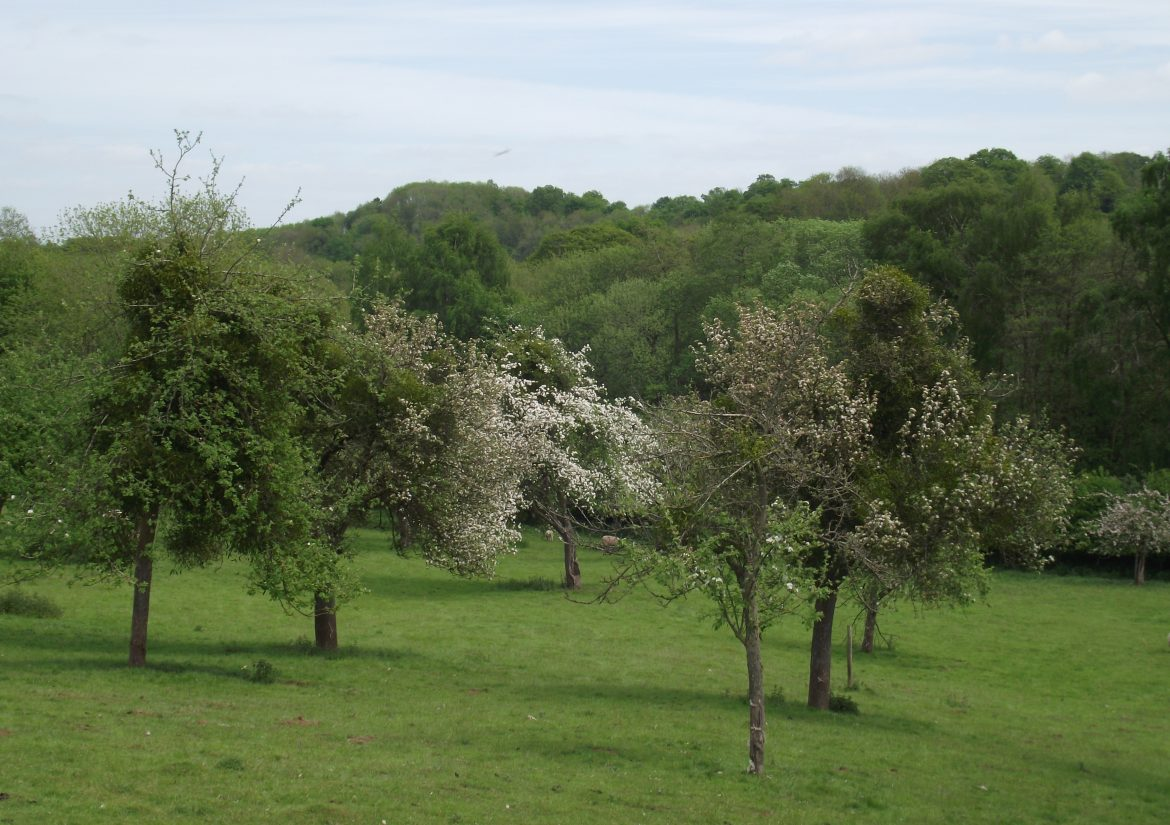Oxnalls orchard visit May 2015 with Harriet Carty 007