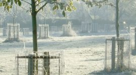 Early morning in a winter orchard